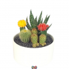This Cacti Garden Large  is a perfect gift