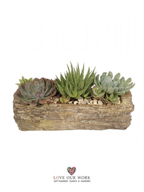 The Succulent Log Garden is a beautiful plant gift presented in a finely crafted log ceramic pot