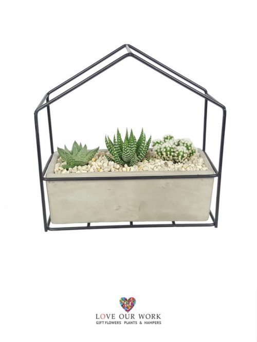 This succulent and cacti garden is a feature piece, that is a conversation